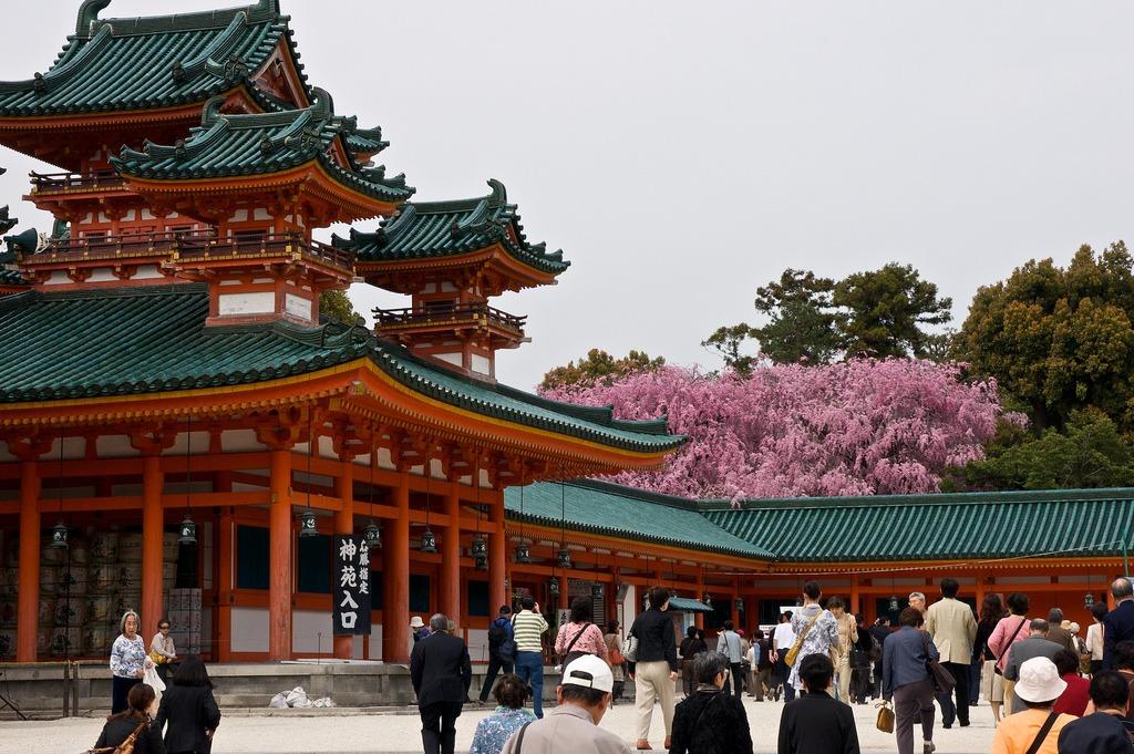 Heian Shrine Sakura