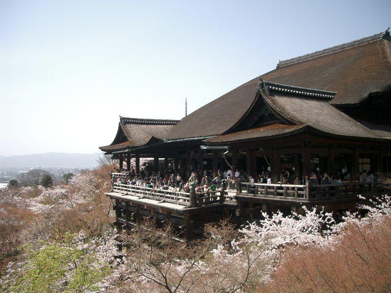 Kiyomizudera temple sakura