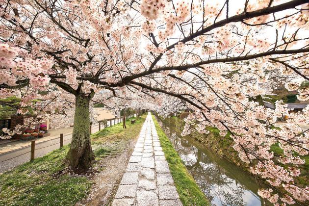 Philosopher's Path Kyoto