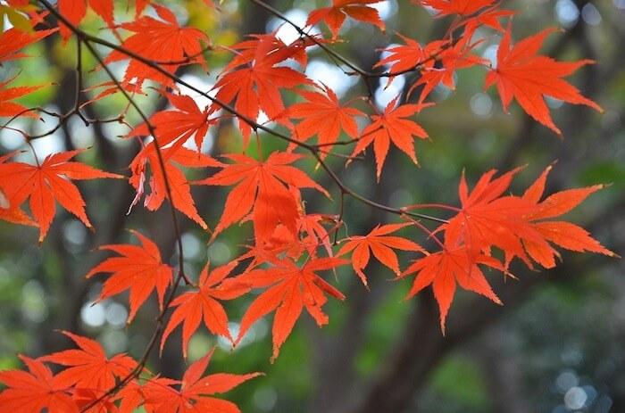musim gugur di tokyo