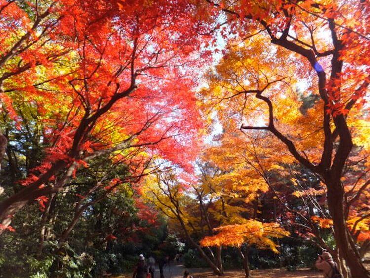 shinjuku-gyoen-musim gugur di tokyo