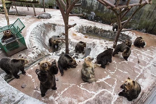 noboribetsu bear park hokkaido