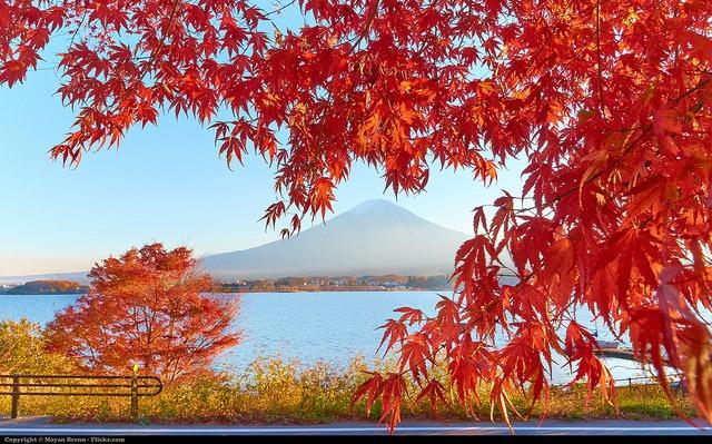 paket tour jepang autumn november 2016