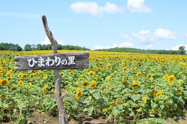 hokuryu-himawari2