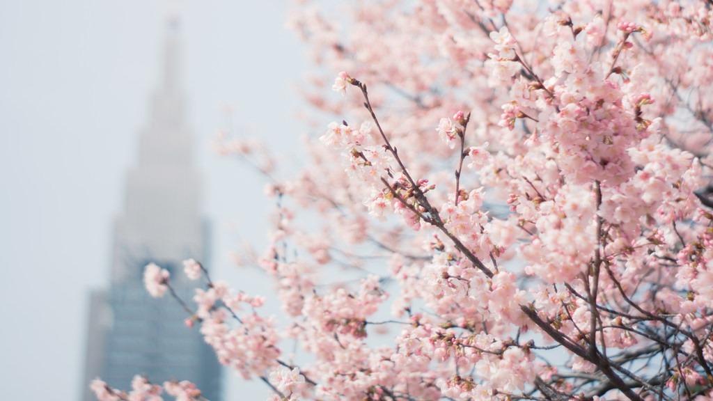 """Paket Wisata Tour ke Jepang """" Sakura """" 29 Maret – 3 April 2018"""