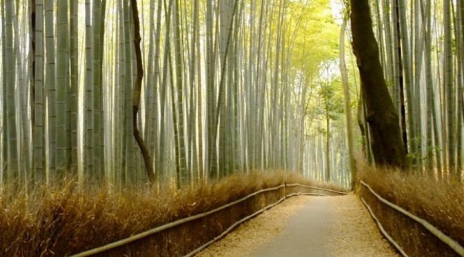 bamboo groove musim gugur
