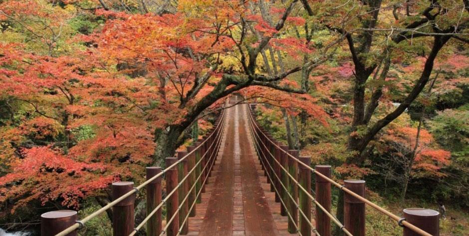 arashima by keihintour.com