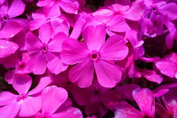detail bunga by en.rocketnews24.com