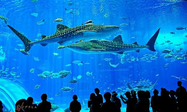menikmati keindahan alam laut by mai-ko.com