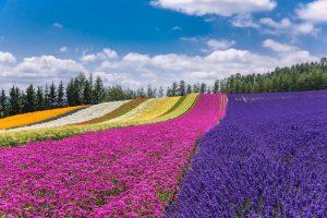 Berencana Liburan Ke Hokkaido Jepang Di Musim Panas? 7 Tempat Wisata Musim Panas di Hokkaido Ini Patut Anda Coba