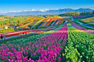 Mau Liburan Luar Negeri Yang Tak Terlupakan? 5 Wisata Jepang di Biei Hokkaido Ini Bisa Dijadikan Pilihan