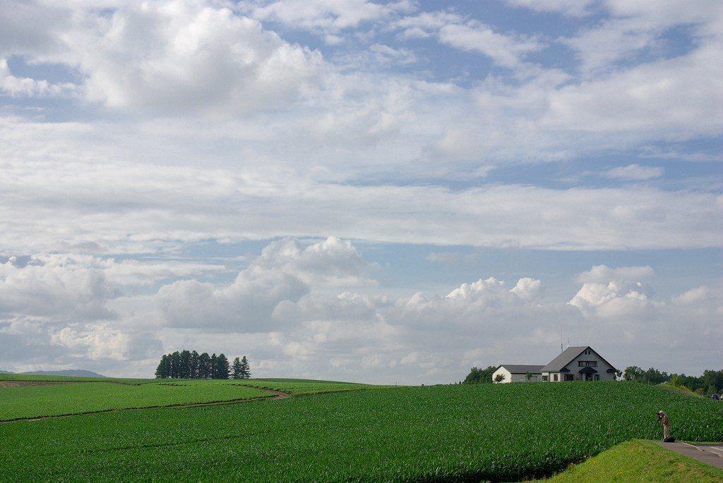Panorama Biei