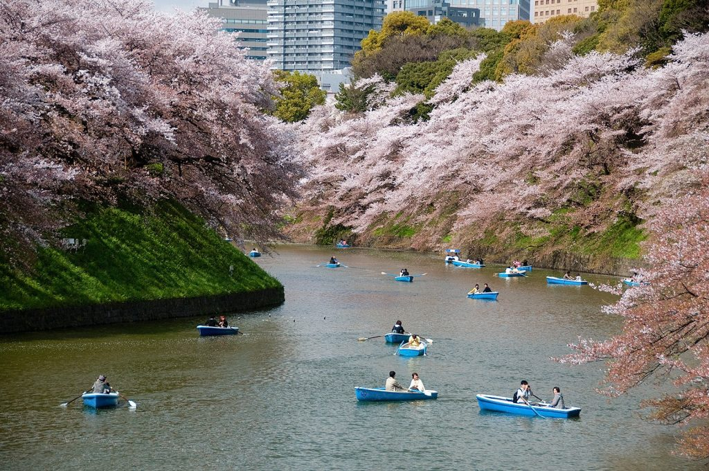 Sakura Chidorigafuchi di Tokyo Jepang