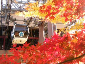 "Paket Open Trip Tour ke Jepang ""Autumn Romantic Hakone"" November 2018"