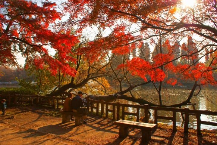 inokashira by matcha-jp.com