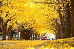 Taman-taman Indah Saat Musim Gugur di Tokyo Jepang
