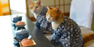 5 Cafe Kucing di Jepang Sebagai Obat Stress