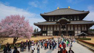 Nara Pilihan Liburan Anti Mainstream di Jepang