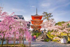 Rekomendasi 18 Tempat Sakura Mekar Terbaik di Tahun 2020